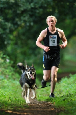 One of Akna K9 Academy runners with a CSv Wolfdog cross also owned by Akna K9 Academy